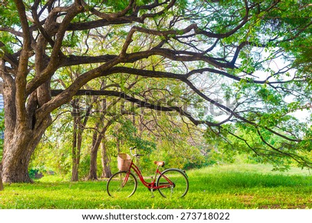 Red bicycle on green grass under big tree with sun light - Shutterstock ID 273718022