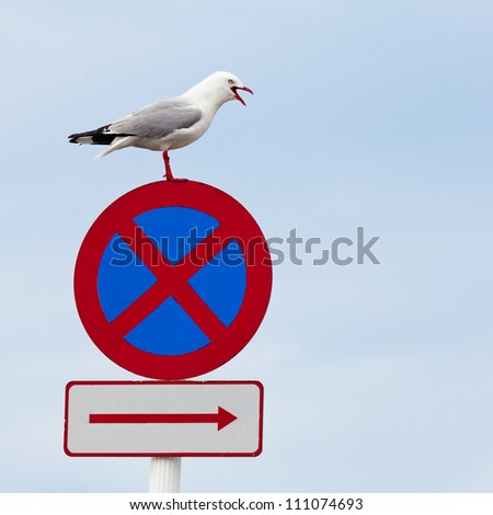 """Red-billed gull, Chroicocephalus scopulinus, standing with open beak on top of """"No stopping"""" traffic sign with plenty of copyspace"""