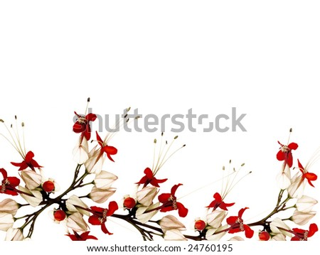 flower border black and white. stock photo : red lack and