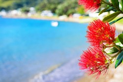 Red blossom of Pohutukawa tree against picturesque background of tranquil bay water and sandy beach on a beautiful summer day. Close-up. Iconic New Zealand