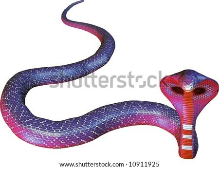 Red-Blue cobra snake isolated on white background.