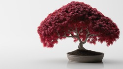 Red bonsai, isolated on a white background