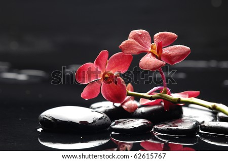 Red branch orchid and black stones with reflection