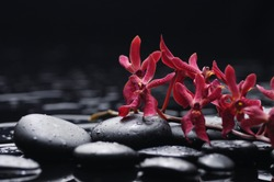 red branch orchid with stones