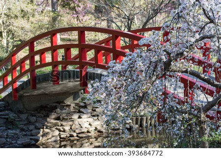 red bridge over water in japanese garden 393684772 - Japanese Garden Cherry Blossom Bridge