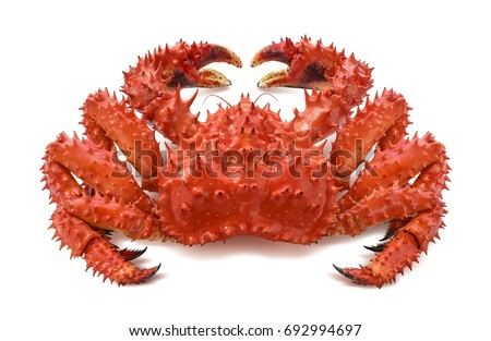 Red brown king crab 2 isolated on white background as package design element #692994697