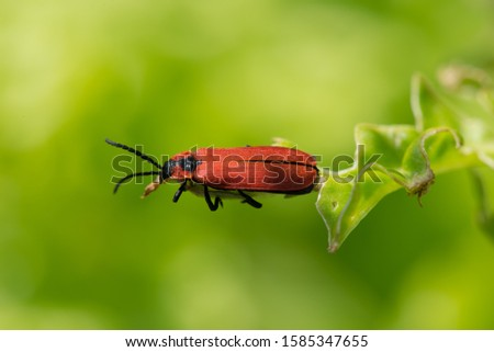 Red bug ready to start from leaf.