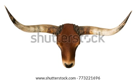 red bull head and horn isolated white background