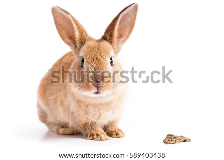 Red bunny with rabbit feed on white background