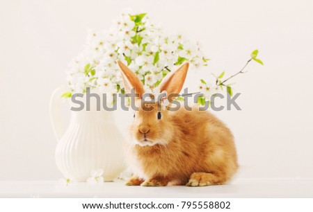 red bunny with spring flowers on white background #795558802