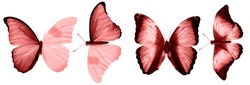 Red butterflies isolated on white background. tropical moths. insects for design.