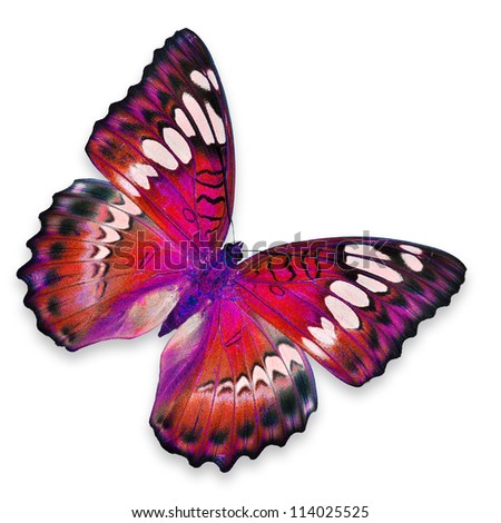 Red Butterfly flying
