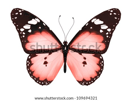 Red butterfly, isolated on white