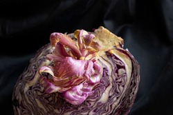 Red cabbage, half a cut cabbage with a beautiful gorgeous pink purple flower sprout with lilac petals on a black background, dark photo still life alien food flower