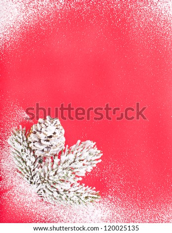 red card in the form rectangular  and a small sprig of fir with snow isolated on white background concept of Christmas and New Year