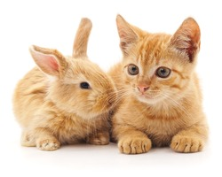Red cat and rabbit isolated on a white background.