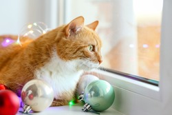 Red cat at home looks out the window in winter in December.Christmas cat is in the toys and the balls with lights.Merry Christmas 2021. Happy new year! Beautiful pet with green eyes