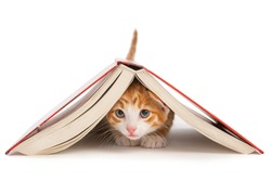 Red cat crawled under the book
