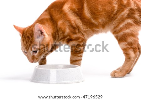 red cat eats from a  bowl isolated on white background