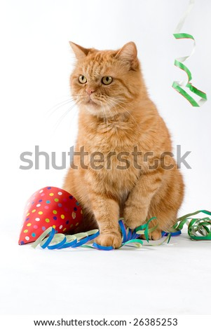 red cat having a party with confetti