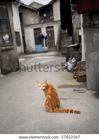 Red cat in a Chinese street