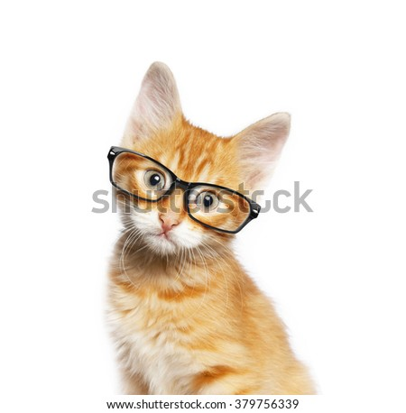 Red cat in glasses, isolated on white backgroundv #379756339