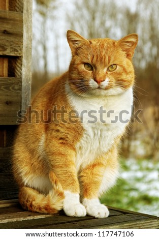 Red cat is sitting on the  bench in a country side.