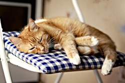 red cat is sleeping on a blue pillow on a chair in the sunshine.