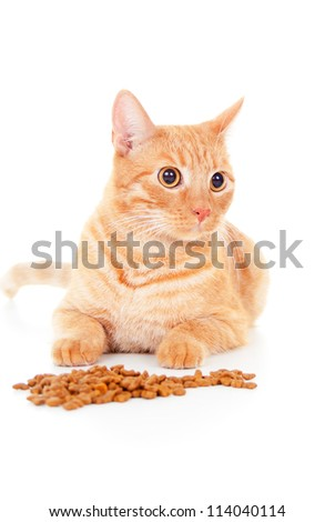 red cat lying near the feed