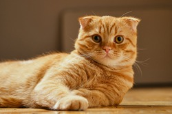 red cat lying on the floor