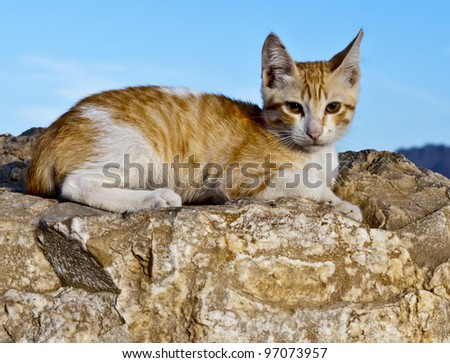 Red cat near marine beach