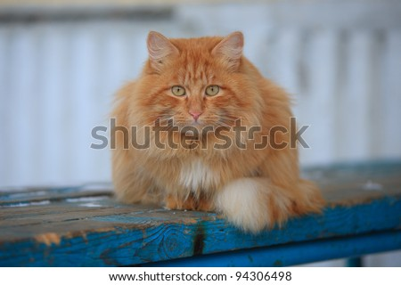 red cat on a blue bench