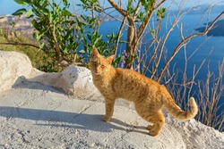 Red cat on a high rock above the sea