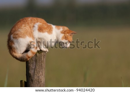 Red cat on a pole staring at the ground