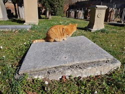 red cat on a tomb stone in Rome, Italy