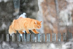 red cat on a wooden fence