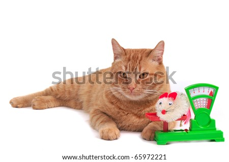 Red cat selling a freshly caught mouse - stock photo