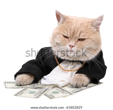 stock photo : Red cat sitting on the dollar on the white background, Christmas, New Year