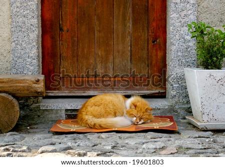 red cat sleeping in front of the door