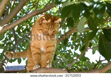 Red cat standing in a tree looking down