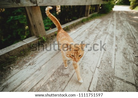 red cat walks on a bridge over a mountain river on a railing, a sketchy plan, a beautiful cat #1111751597