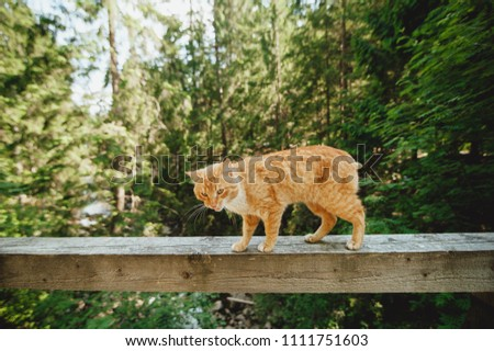 red cat walks on a bridge over a mountain river on a railing, a sketchy plan, a beautiful cat #1111751603