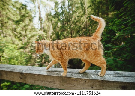 red cat walks on a bridge over a mountain river on a railing, a sketchy plan, a beautiful cat #1111751624