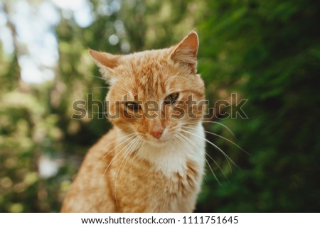 red cat walks on a bridge over a mountain river on a railing, a sketchy plan, a beautiful cat #1111751645