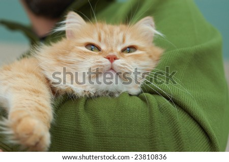 Red cat with green eyes relaxes on the man hands