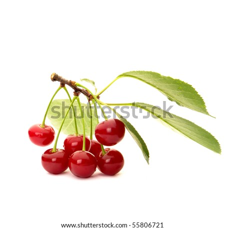 Red cherryon a white background - stock photo