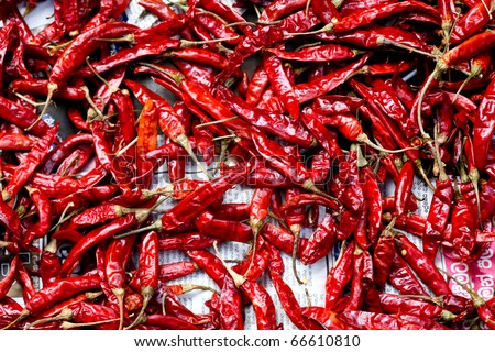 red chili drying in the sun - stock photo