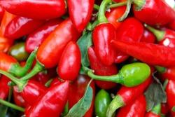 Red chili pepper ( chile pepper, chilli pepper, chilli) white background.It contains vitamin C, other species contain provitamin A beta-carotene.In addition, peppers are a rich source of vitamin B6.