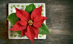 red Christmas flower isolated on old wooden background