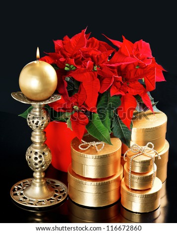red christmas flower poinsettia with golden gifts on black background. merry christmas! card concept